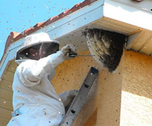 Bee & Wasp Removal